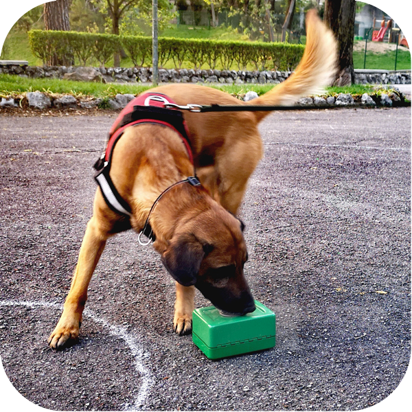 SCENT DETECTION per cani